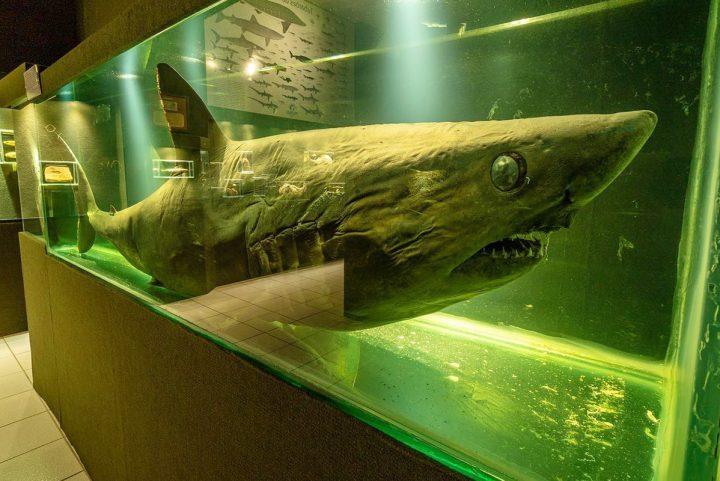 Museu oceanográfico Univali