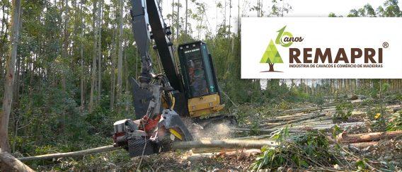 Remapri – colheita florestal, transporte e beneficiamento de madeira – Santa Catarina